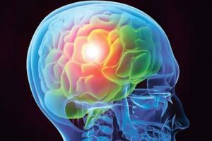 Cerveau dessin