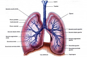 poumonsimag