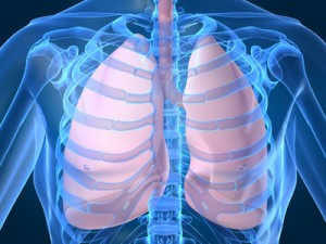 Respiration-01-Lungs-Web